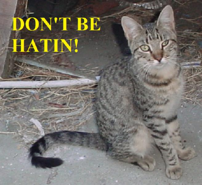 Getting Alley/Stray/Feral Cats Fixed Cheap - PeachParts Mercedes-Benz Forum